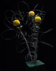 被束縛的花 | Bound Flowers